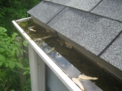 Clogged Rain Gutters
